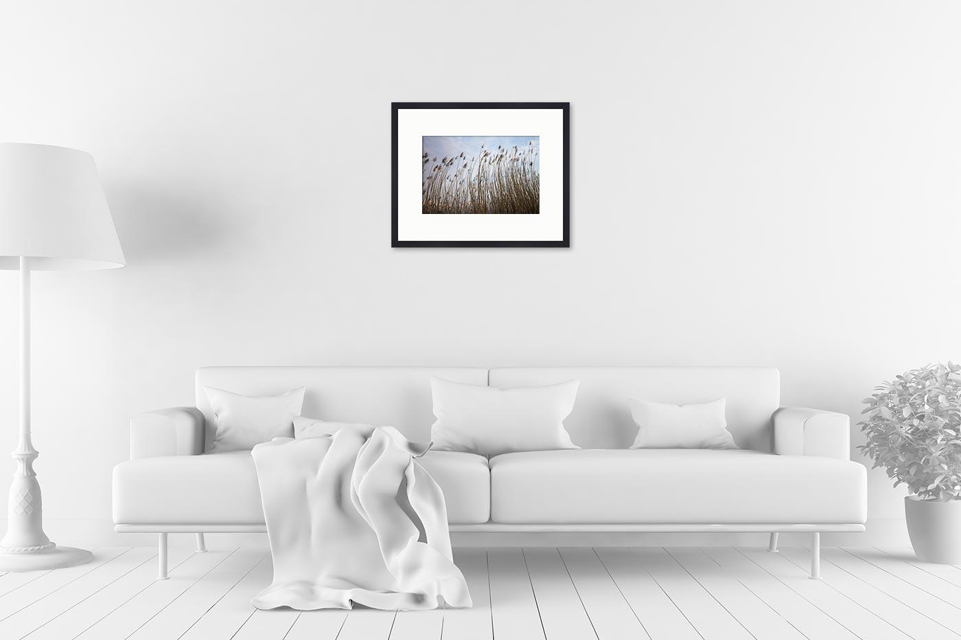 Cadre galerie 40x50 Roseaux Corse