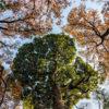 Tokyo Trees