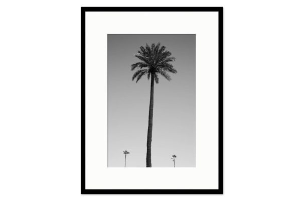 Cadre galerie Three palm trees