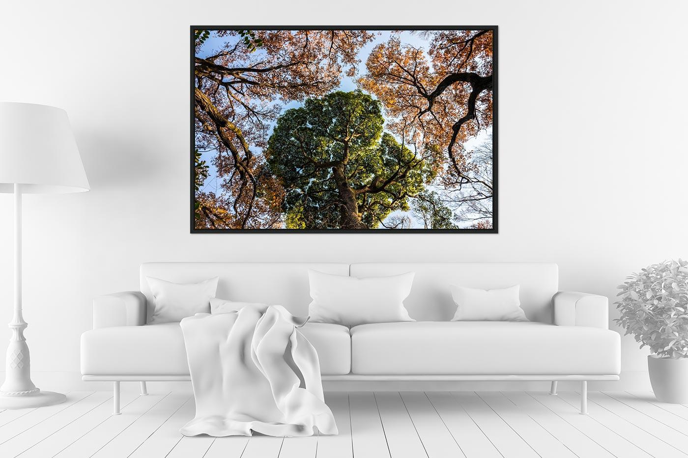 Caisse americaine 80x120 Tokyo Trees