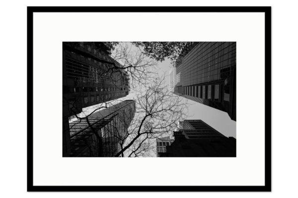 Cadre galerie Buildings Trees