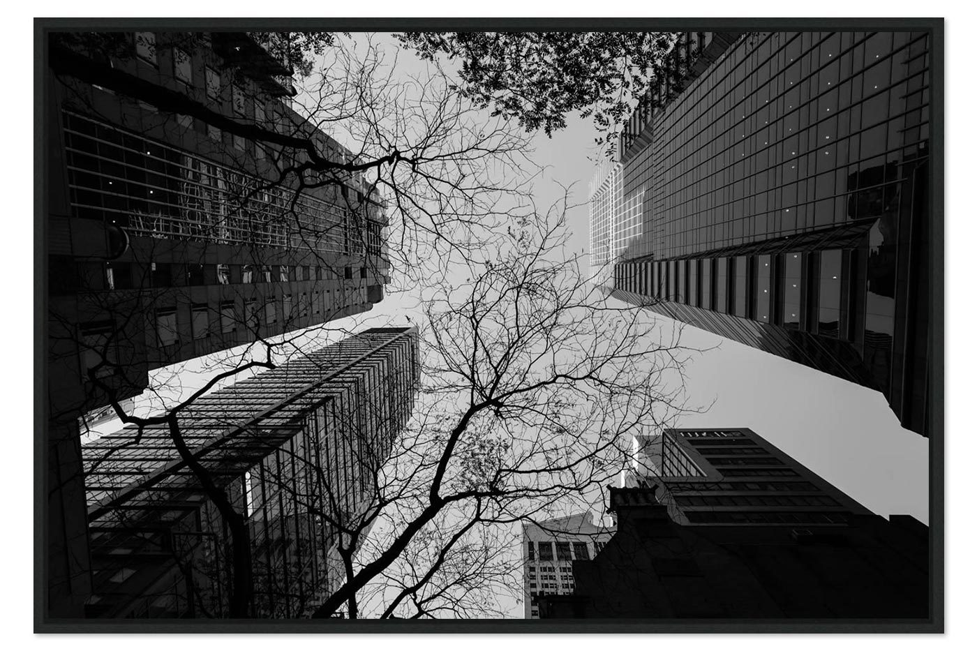 Caisse americaine Buildings Trees
